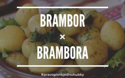 Brambor vs. brambora